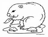 Gopher Coloring Pages Colormegood Animals 37kb 135px sketch template