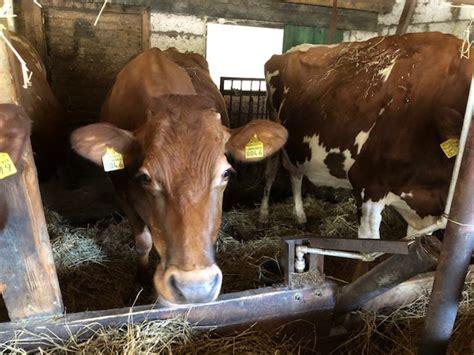 Novada garša - Priežkalni, zemnieku saimniecība Priekuļos