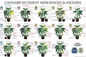 Marijuana Plant Nutrient Deficiency  U0026 Excess Diagram