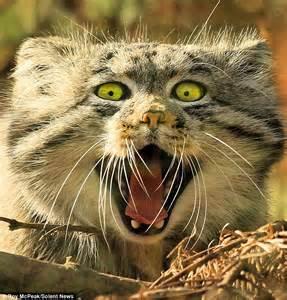 bagpuss  badpuss snarling cat   tv cat daily
