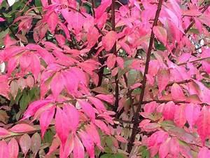 Blätter Pressen Schnell : herbstfarben einfangen herbstlaub pressen herbstlaub pflanzenteile und basteln mit ~ Markanthonyermac.com Haus und Dekorationen