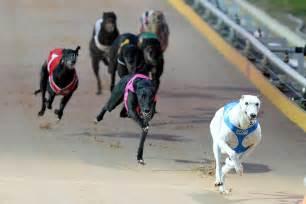 Victorian greyhound racing set for an exciting season | GRV