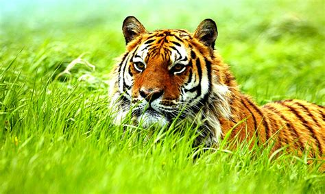 Wild Animal Pictures Collection For Free Download
