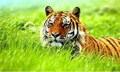 Wallpapers Wild Animals Animal Wallpapersafari