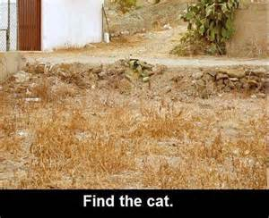 can you a cat random musings can you spot the cat