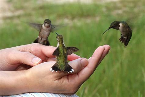 how tall are hummingbirds why do clouds float