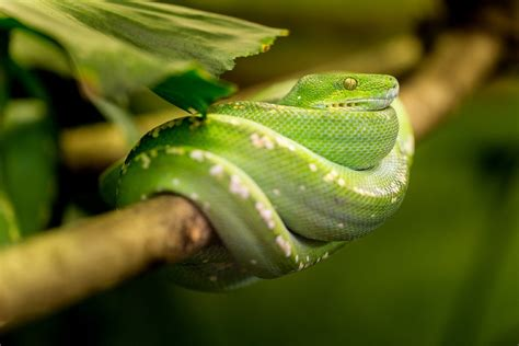 13 Awesome Facts About Snakes