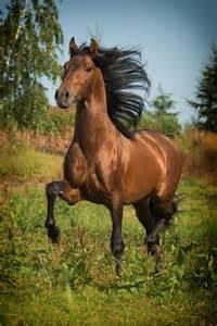 sprüche pferde 1000 ideen zu pferde auf palomino fohlen und schwarze pferde