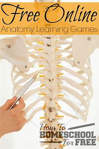 Add These Free Online Anatomy Learning Games To Your