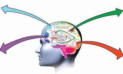 Memory Brain Clipart Cliparts Guru Memories Clip