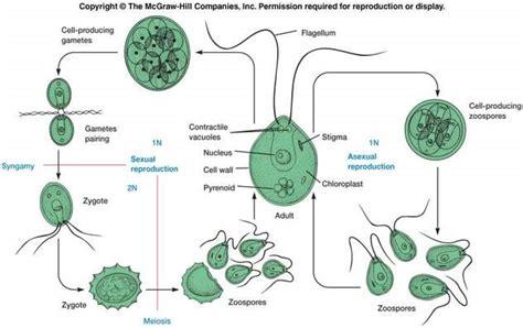 thallophyta biologyisc