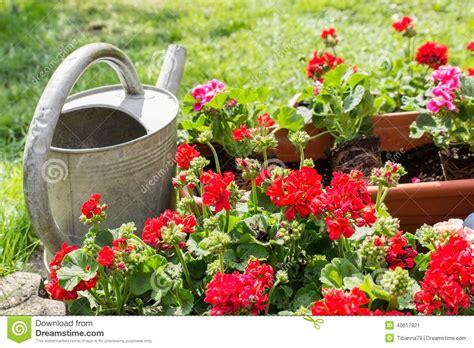 pot de fleur avec la bo 238 te d arrosage photo stock image 40617821
