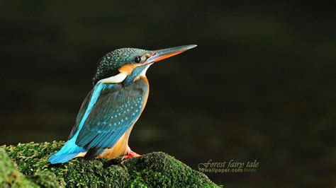 3d Birds Wallpapers by Lovebirds Wallpaper 56 Images