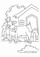Coloring Billy Gruff Goats Three Troll Goat Library Clipart Clip Popular Line Coloringhome sketch template