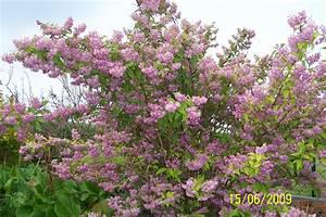 Blühende Pflanzen Winterhart : bl hende str ucher winterhart schattig pflanzen f r ~ Michelbontemps.com Haus und Dekorationen