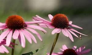 Blumen Im Juli : blumen ~ Lizthompson.info Haus und Dekorationen