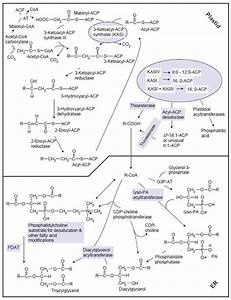 Tag Synthesis