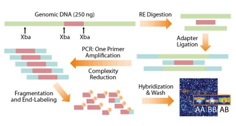 Illumina Company Profile Affymetrix Snp Genotyping Service Atlas Biolabs Gmbh