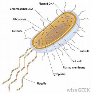 What Are The Differences Between Prokaryotic And