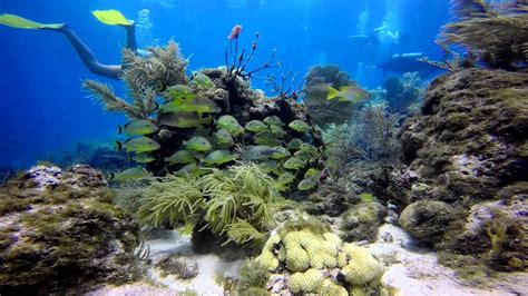 scuba diving key largo july  gopro hero black youtube