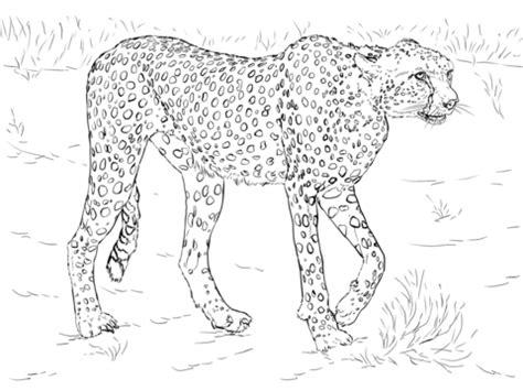 kolorowanka gepard kolorowanki dla dzieci  druku