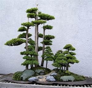 bonsai baum pflege sorgen sie fur eine schone pflanze With garten planen mit bonsai growing kit