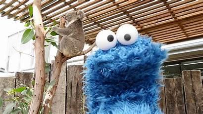 Cookie Monster Wallpapers Desktop Birthday Happy Pixelstalk