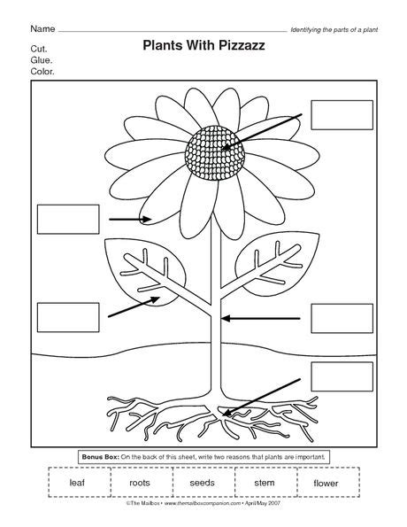 parts of a flower worksheet science kindergarten 729 | d893360adf4638e2517e5a41f4f807e3