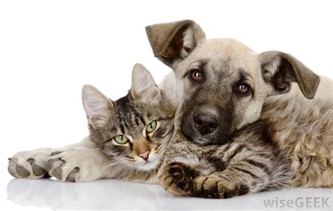 dogs that are with cats what are placental mammals with pictures