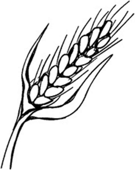 pflanzensteckbrief weizen sw pflanzensteckbriefe
