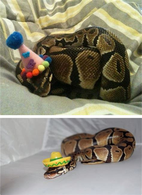 tastefully offensive  tumblr snakes wearing hats