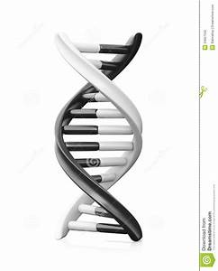 Stock Photography: Black and White Dna. Image: 34657542