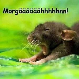 Guten Morgen Tierbilder : 1158 best gute nacht guten morgen images on pinterest funny pics funny sayings and have a ~ Frokenaadalensverden.com Haus und Dekorationen