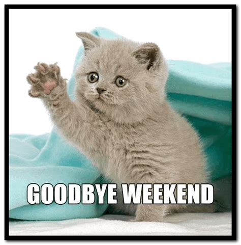 Goodbye Cat Meme - goodbye weekend pictures with quotes