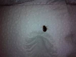 view from our unit picture of weston florida tripadvisor With bed bugs in florida