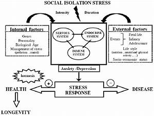 Factors That Influence The Stress Response  Psychological