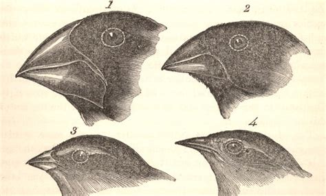 The Story Of Darwin's Finches