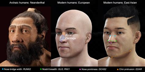how we found the genes that nose shape and what