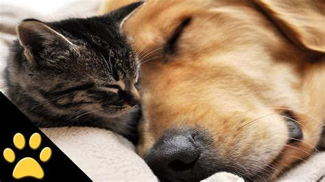 Cute Cat And Dog Pics Download