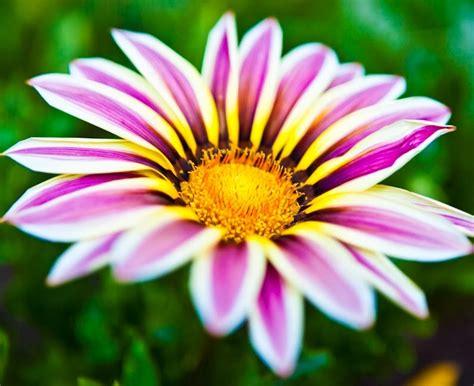 flower to bloom blooming flower