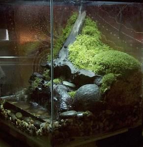 Sphagnum moss blocks: any good? - Caudata.org