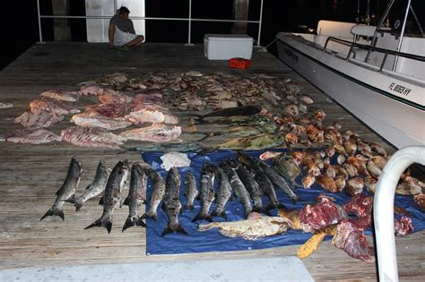 fwc illegal possession species turtle sea arrests florida including fish wildlife arrested conservation westernbass poachers undersized commission weekend four