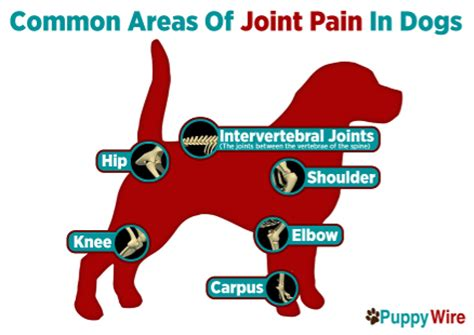 does lexapro help joint pain online and mail order