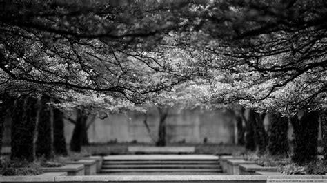 black  white nature trees wallpaper allwallpaperin