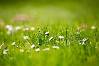 Grass Fields Wallpapers Field Resolution Px