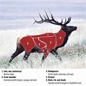 Back 40  How To Field Dress An Elk  U2013 Explore Big Sky