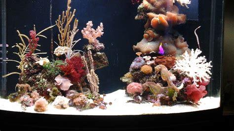 Keeping Seahorses In Aquaria #1