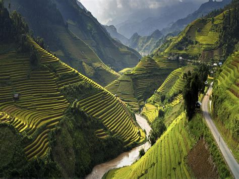 landscape terasasti fields  rice  cang chai district
