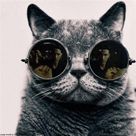 Morpheus Cat Meme - morpheus cat matrix morpheus know your meme