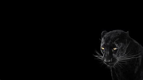 Panther, Black Background, Cool, Animal wallpaper